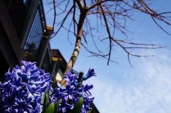 Spring 001