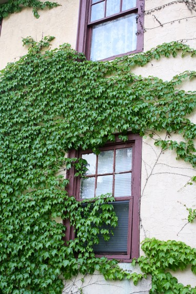 I love the vines that grow on some of the houses...