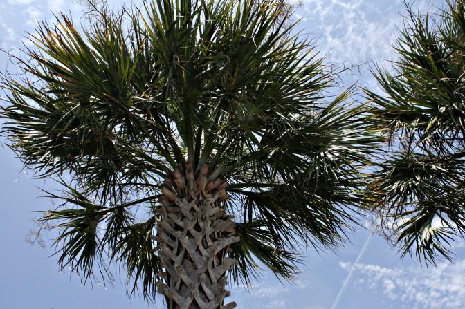 Florida 046