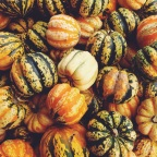At the Pumpkin Patch…