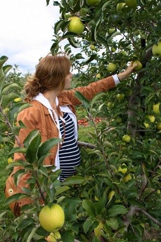 Apple Picking-13