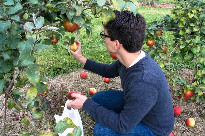 Apple Picking-2