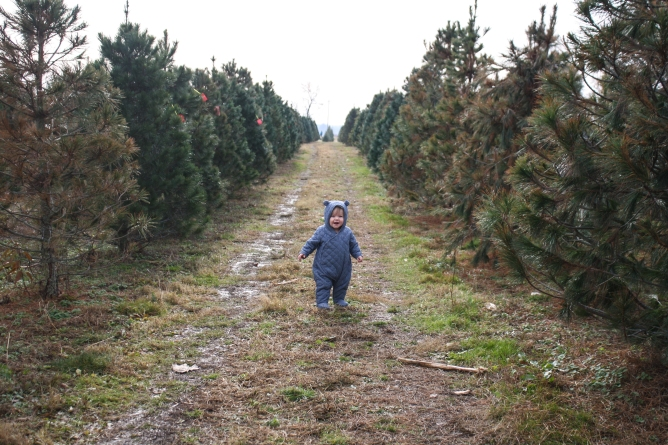 Tree Farm (13 of 83)