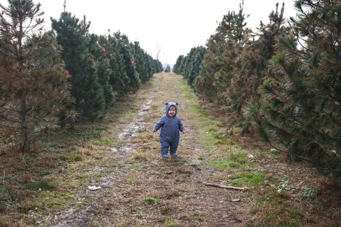 Tree Farm (13 of 83)