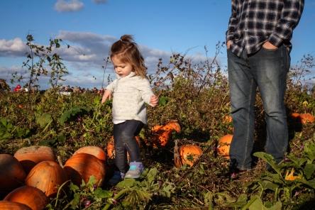 pumpkin-patch-91