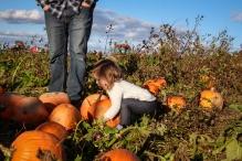 pumpkin-patch-93