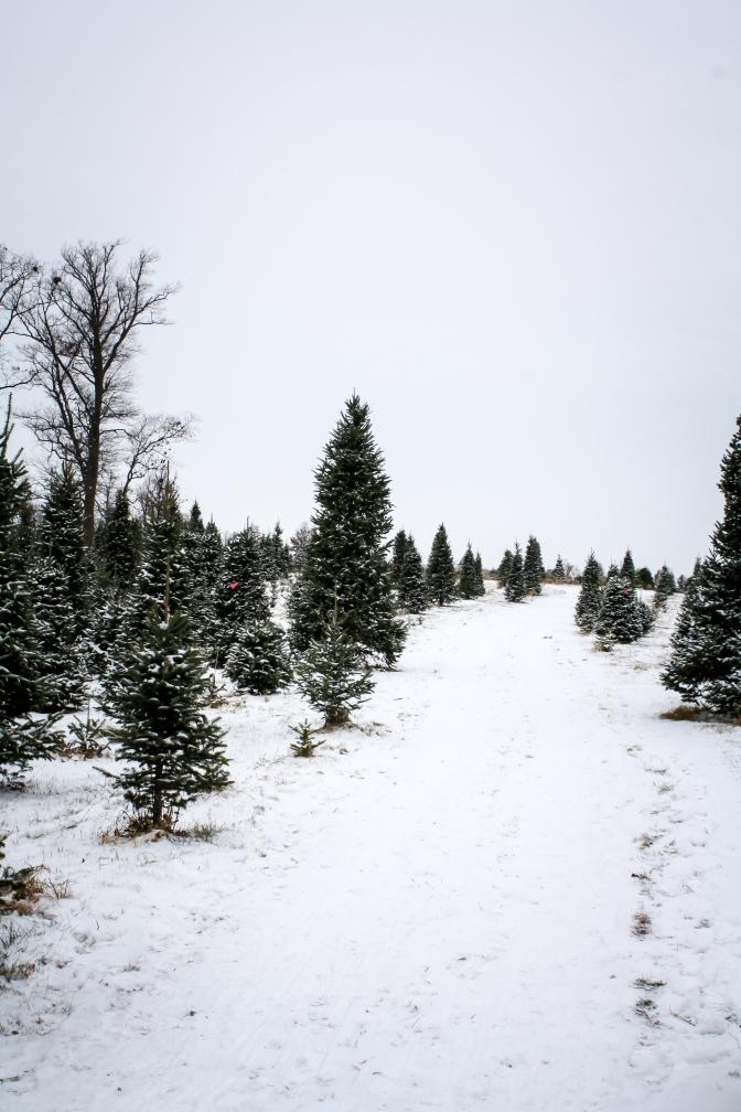 tree-hunt-2016-45