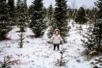 Tree Hunt 2016