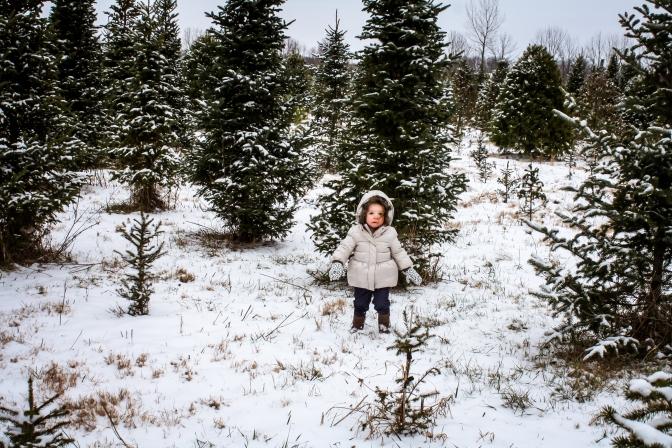 tree-hunt-2016-80