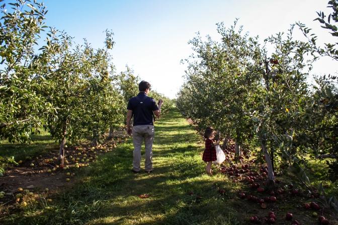 Apple Picking-22