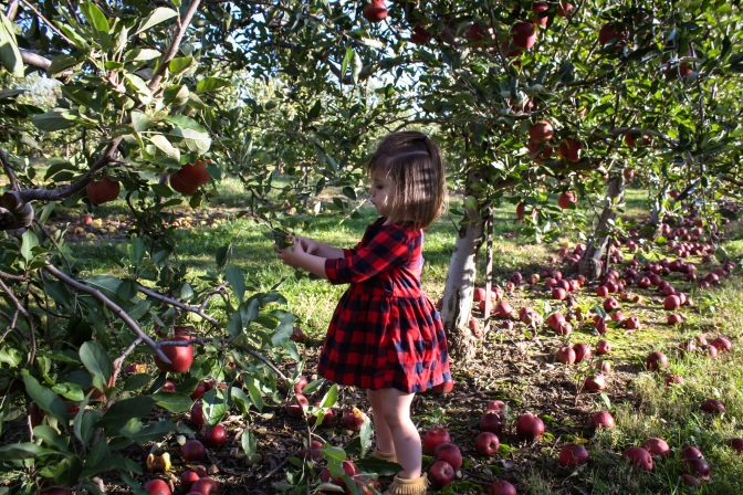 Apple Picking-32