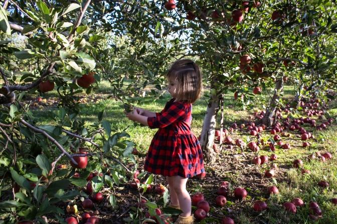 Apple Picking-32