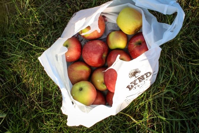 Apple Picking-40