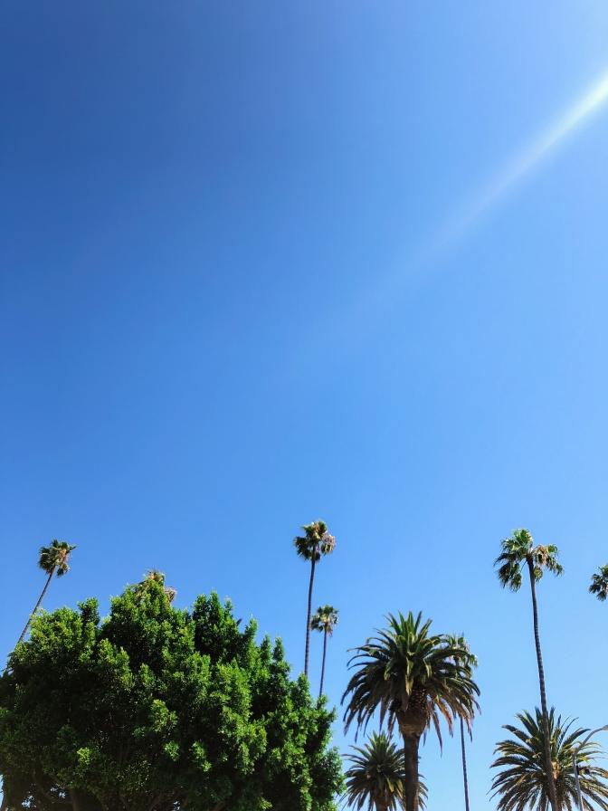 California Trip-185